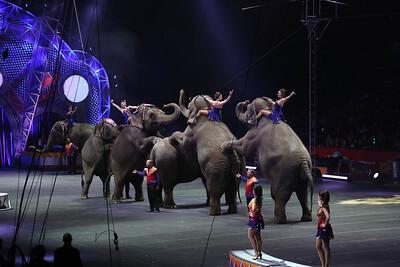 Circus_36