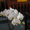 Orchid plant from great-grandson Will Giombi