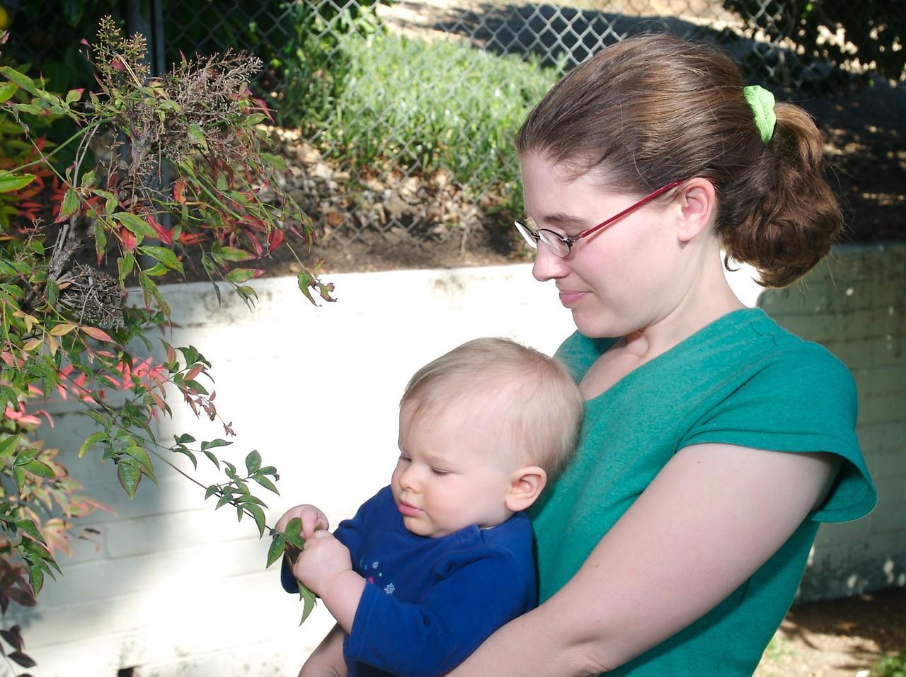 Touching the leaves in grandma and grandpa's backyard. 1/24