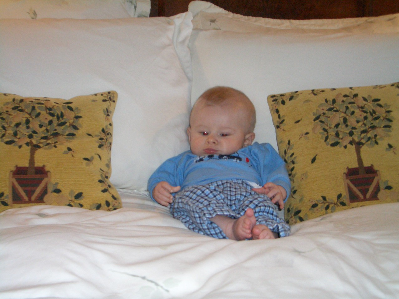 Cody in between two pillows at the bed and breakfast 8/17