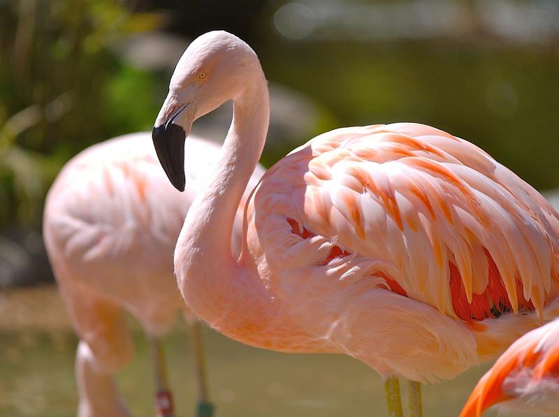 Flamingos are such interesting creatures.