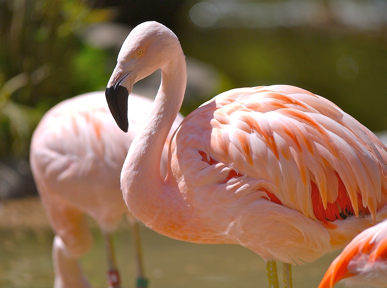 Flamingos are such interesting creatures.