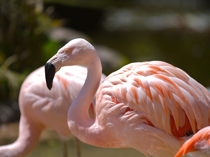 At the Santa Barbara zoo Cody liked the flamingos the best. 4/19
