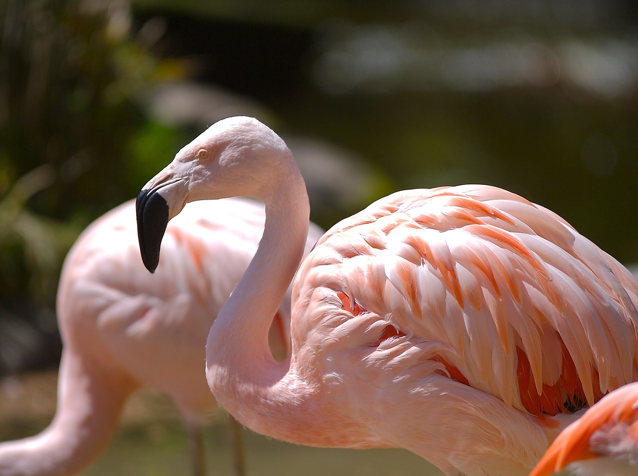 At the Santa Barbara zoo Cody liked the flamingos the best. 4/19