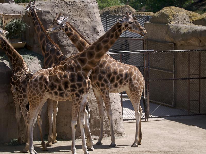 The giraffes were a big hit.