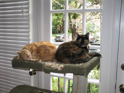 Marmalade and Isabelle relaxing in a quiet house...they have no idea what's in store!