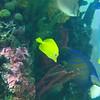 2007 Colorado Trip - Aquarium Fish