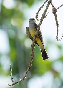 Unidentified Bird, Rocky Mountain Arsenal NWR.