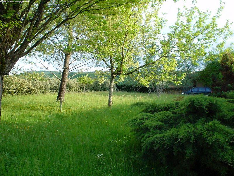 Backyard, from terras