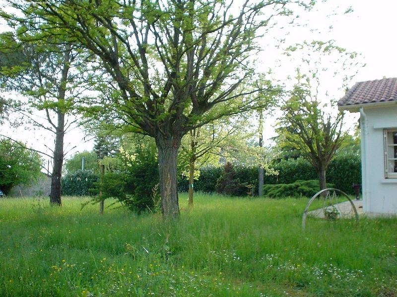 Backyard, towards front