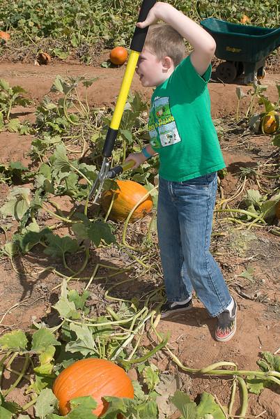 10.7.2007 -- Pumpkin picking at Apple Annies
