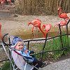 Freaky cold weather on 3/27/09, shortly before Zia's arrival, but we decided to visit the zoo anyway.  Turned out well as all the animals were moving around and doing things to stay warm rather than laying around like they normally do.  Notice Cooper insisted on wearing his swim goggles!