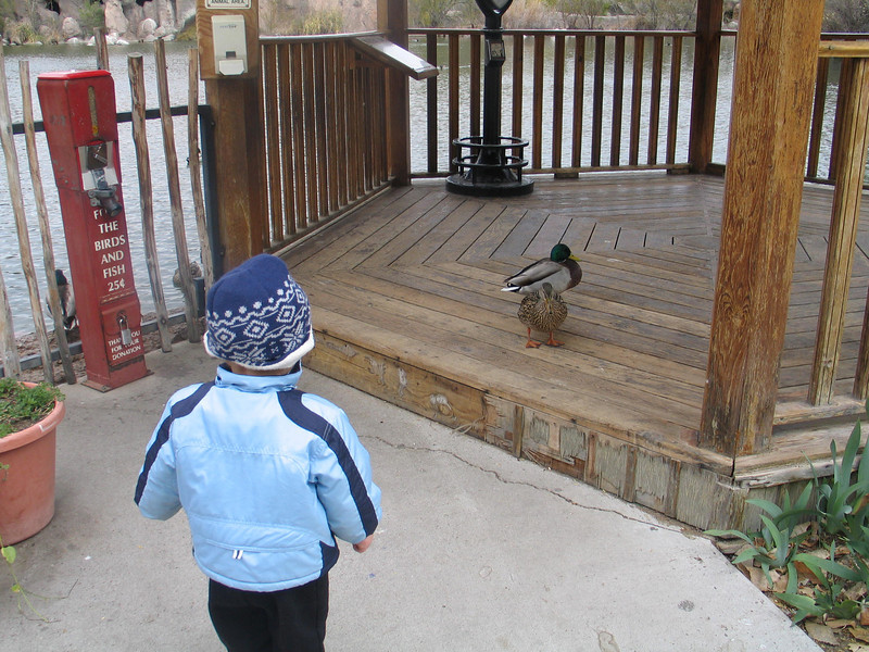 Cooper likes to feed the ducks...within 2 feet, though, he gets scared away.