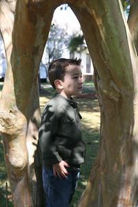 IMG_4039 Lucas Tree Profile