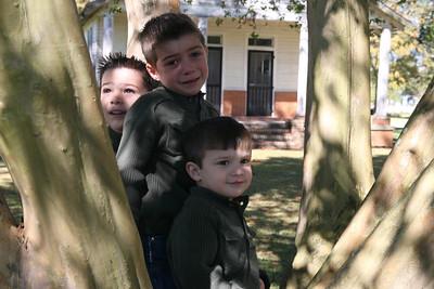 IMG_4046 boys in tree