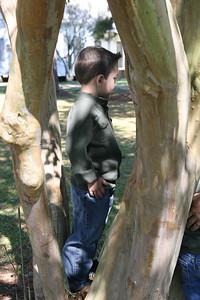 IMG_4038 Lucas Tree
