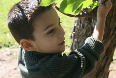 IMG_4057 Lucas Tree