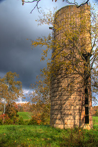 warm sunlight on the silo, huge tree growing in the silo