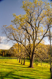 HDR of the walnut trees
