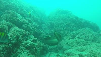 11 Eel Swim