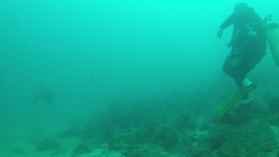 09 Sea Turtle Gliding