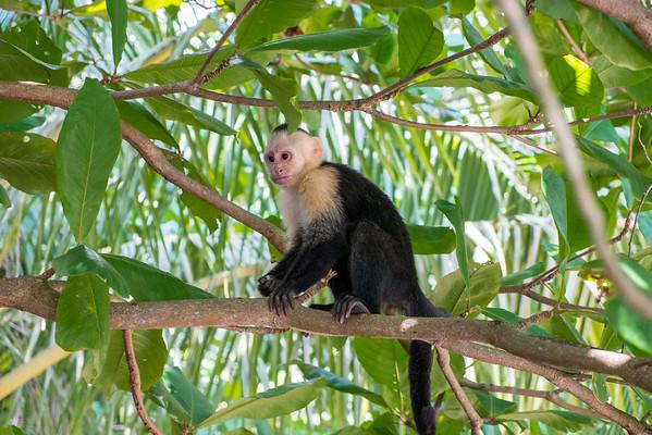 Costa Rica Animals - 2014