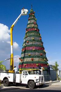 Christmas Tree, Aruba