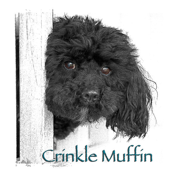 Crinklie's official 2013 portrait! Taken at Linda Wooding's porch (4th Street - Old Town).