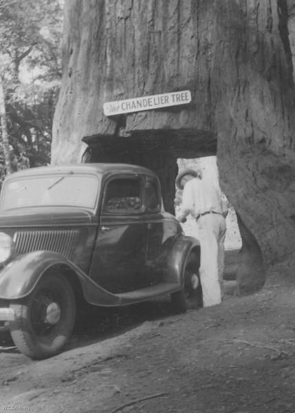 20090101-Cletus in Redwoods 1939-1043SM