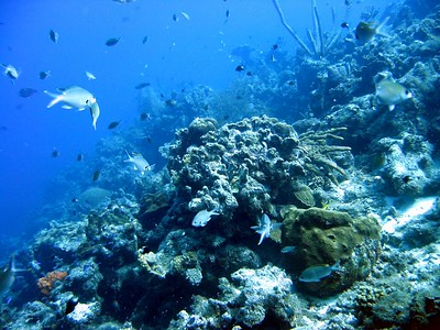 Steve reef panorama 2