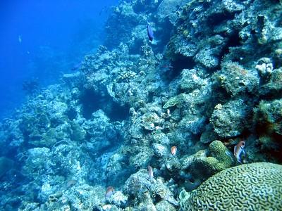 Steve reef panorama