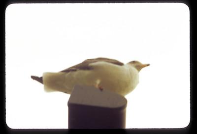1972 b26