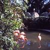 Robert Louis Dungan, 126 slides <br /> Flordia Trip 1979