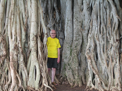 Dad being swallowed by a Banyan tree