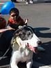 Shy kidlet meeting Daisy (At the festival--SLzHA Halloween Parade & Festival)