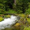 Mt. Adams Nat Forest