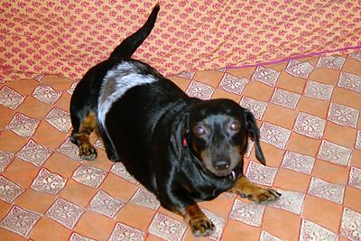 Dash (9 July 1993 - 2 March 2010)