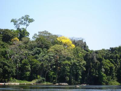 Dave's Suriname Photos