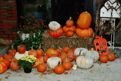 DOES IT LOOK LIKE THANKSGIVING? I NEVER BOUGHT A PUMKIN IN MY LIFE NO I DIDNOT STEAL THEM  CONNECTIONS  CONNECTIONS BEING NICE TO AND KNOWING PEOPLE . I JUST HAD A THOUGHT AND I WILL PUT IT DOWN BEFORE CHARLENES TIME SHE WHOULD NOT KNOW THIS STORY WE WERE HAVING A LARGE GROUP OF PEOPLE IN THE YARD ESTIMATE 75 PEOPLE I WAS DOING SOME ELECTRICAL WORK FOR A HELICOPTER SPRAYING MAN THAT WOULD SPRAY FOR ME AND WE WOULD BARTER WHEN YOU HAVE 75 PEOPLE AND YOU WANT TO DO SOMETHING THEY WILLREMEMBER FOREVER IF YOU HAVE A FERTILE MIND YOU ASK   ANSWER SURE WELL I WAS THE ONLY ONE WHO KNEW  WHEN I SEEN HIM I ANNOUNCED HERE COMES THE HELICOPTER NOW. I WARNED STAY BACK UNTIL THE BLADES STOP AND THE MAN AND HIS SON LANDED IN THE FRONT YARD THEY GOT OUT SPOKE TO EVERYONE HAD A HOTDOG AND SODA SHOWED EVERTONE THE CONTROLS GOT BACK IN FIRED IT UP WENT STRAIGHT UP THEN OVER THE POND BANKED AGAINST THE TREE LINE WAVED AND FLEW AWAY  BEAUTIFUL BEAUTIFUL  LITTLE OLD LADIES GRANDMOTHERS CHILDREN GREAT GRANDMOMS ALL ENJOYED THE SHOW      COMMENT FROM ONE OF MY NEPHEWS UNCLE SKIP YOU TOPPED IT ALL WITH THIS ONE . INGENUITY  AND NECESSITY IS THE MOTHER OF INVENTION  TODAY THE YOUNG PEOPLE CALL IT THINKING OUTSIDE THE BOX  WELL UNCLE SKIP  SEEN THE OPPURTUNITY AND MADE IT WORK  BRAVO BRAVO