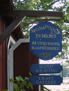 Fun in the berry patch.  We picked about 15 pounds total of blueberries that day