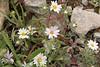 IMG_0808_daisies