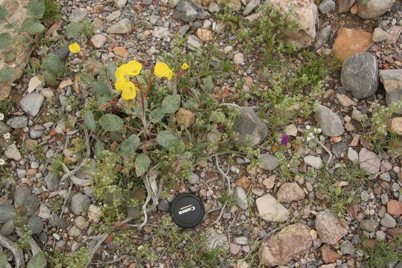 IMG_0815_yellow_purple_scale