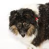 snow dog (taken with flash)