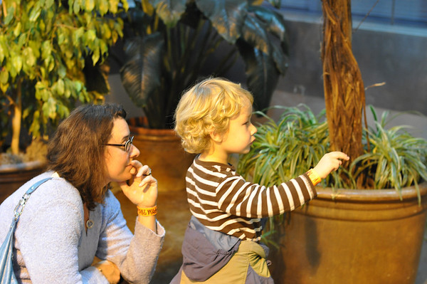 Everett catching butterflies at the Public Museum