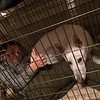 Joey in the dog crate with Shasta!
