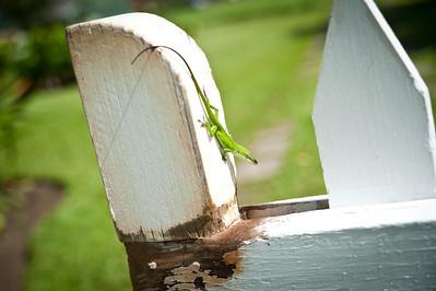 Mr. Gecko.