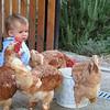 Esto de las gallinas... yo no me fiaría