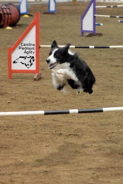 Dog Agility Trial 2014-02-01