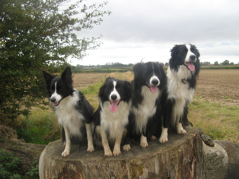 On Beau and Rex's favorite log, the previous 8 photos failed miserably!