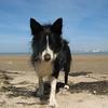 Beau at Calais